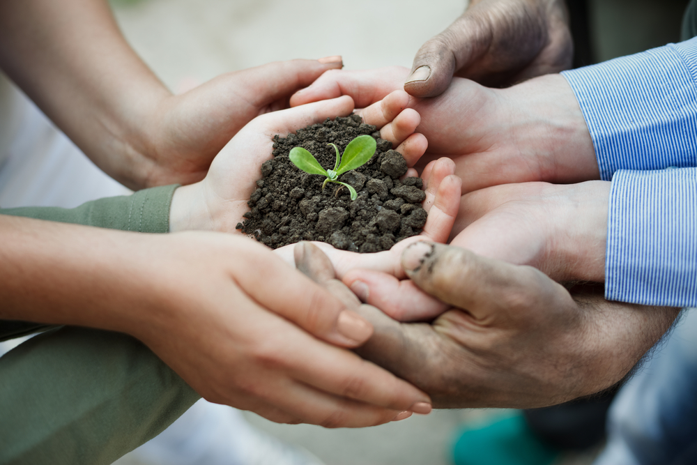 many hands and seedling shutterstock_147729638